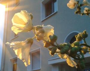 Foto: Blüten werden von Licht angestrahlt