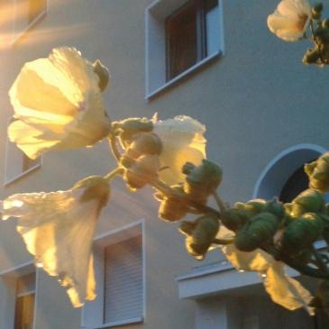 Foto: Blüten im Sonnenlicht