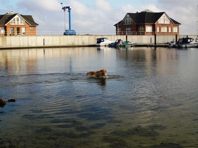 Foto: Hund spielt im Wasser, im Hintergrund ein Hafenanleger
