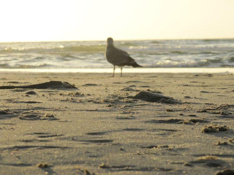 Foto: Möwe am Strand im goldenen Licht
