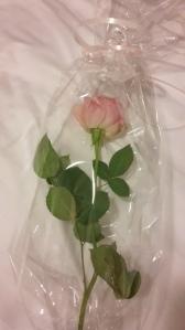 Foto: Rosafarbene Rose liegt auf einem Bett
